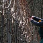 Weinbruderschaft Breyer Hämmchen (WBH)